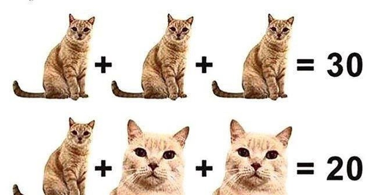 головоломка с картинками кошек межпланетные нарушив, унесёмся