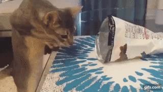 Ловушка. Видео, Гифка, Кот, Ловушка для кота, Ловушка, Пакет, Животные, Питомец