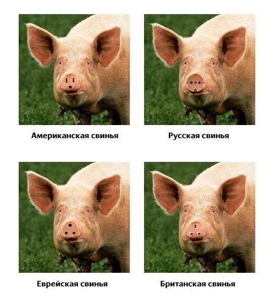 Континентальные свинки.