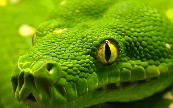 Как какают змеи? Чем пахнет в метро? И другие важные вопросы.. Интересное, Факты, Life, Не может быть!, Длиннопост, Фейк