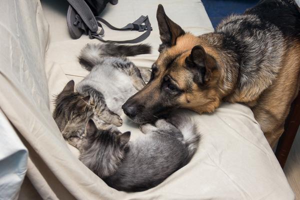 Не хотят котики играть с собачкой...