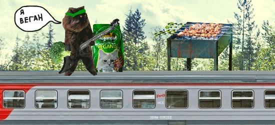 Кот-негр-вегетарианец, играющий на гитаре и жарящий шашлык на крыше поезда Mainka, Гифка, Кот, Шашлык, Поезд
