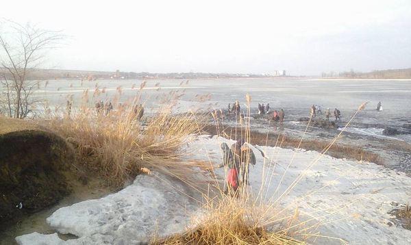 Жители Комрата(Молдова) воспользовались прорывом дамбы:В обмелевшем озере,ползая по илу))ловят рыбу Комрат, Рыба, Дамба, Молдова, Выгода