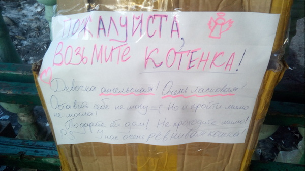 Пикабушники алматинцы Лига Добра, Алматинцы, Кот, В добрые руки, Помощь, Алматы
