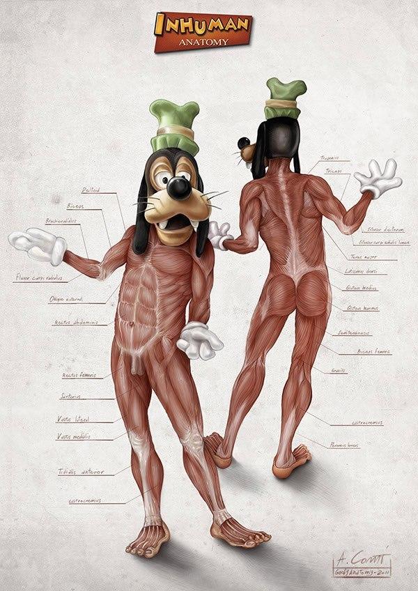 Анатомия персонажей Disney. Пост, который убьет твое детство. Дисней, Мультфильмы, Анатомия, Русалочка, Микки маус, Дональд Дак, Длиннопост