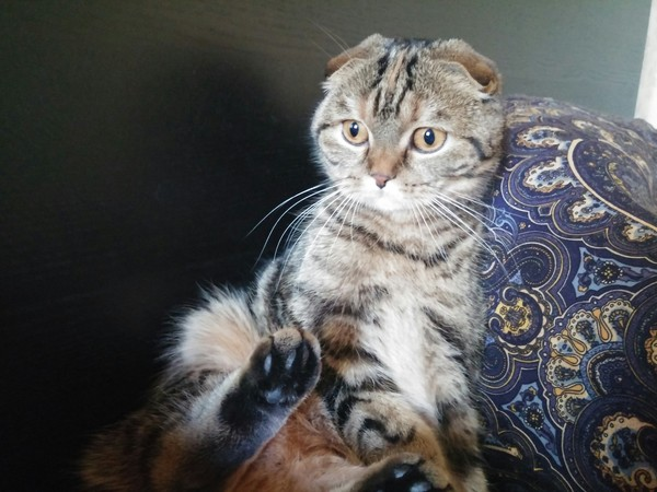 С праздничком Праздники, Кошки и котята, Цветы, Длиннопост, Кот