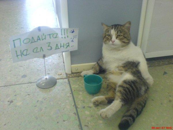 День кота закончился