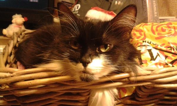 День кота кот, котомафия