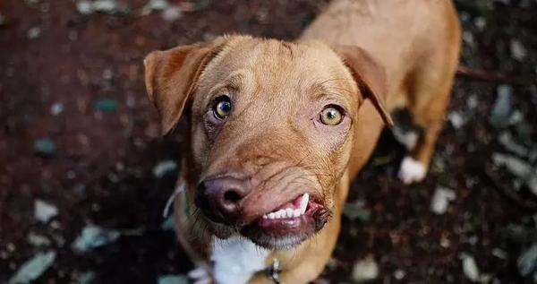 Уникальный пес с кривой мордой влюбил в себя соцсети Собака, Кривой пес, Длиннопост