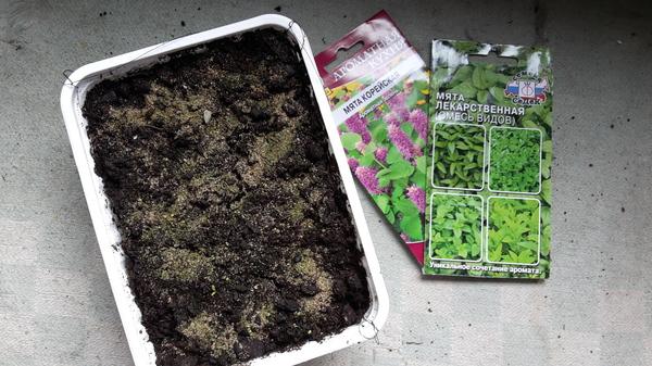 Выращивание мяты в горшке. Мята, Комнатные растения, Растения, Садоводство на окне, Длиннопост