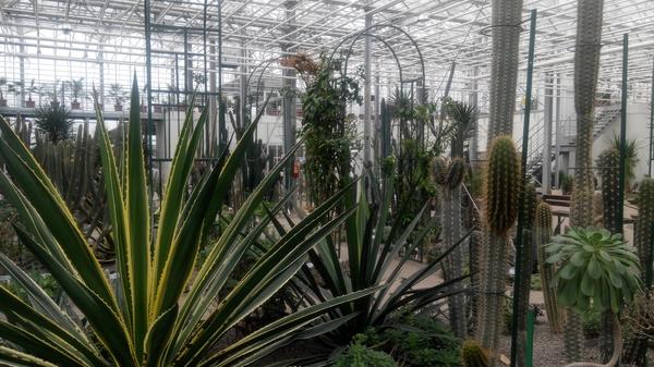 Немного тропиков на севере Европы Латвия, ботанический сад, Тропики, Саласпилс, нужен новый телефон, фотография, растения, длиннопост