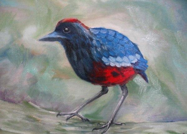 Гранатовая питта рисунок, птицы, Живопись