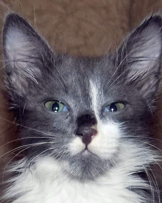 Наш найденыш Кузьма. кот, подобрыш, Кузьма, второй питомец, длиннопост