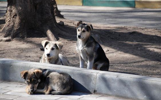 Верховный суд России принял решение о прекращении практики выпуска бродячих животных в естественную среду обитания после стерилизации. бездомное животное, суд, Собака