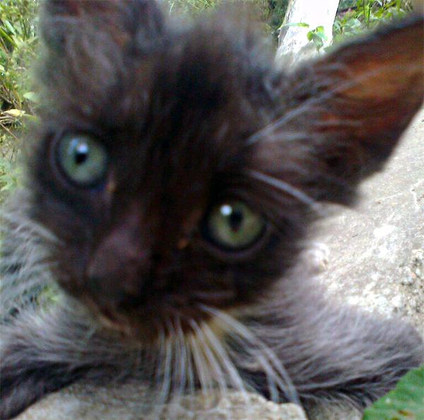 Он выскочил из кустов... Кот, В добрые руки, Добби, Длиннопост