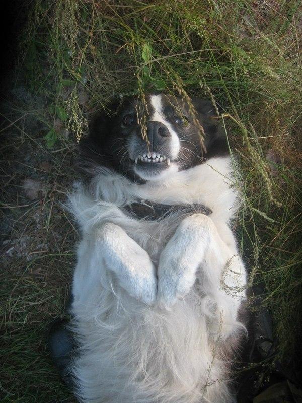 Про то,  как я с собакой мысленно попрощался. Текст, фотография, Собака, Ладога, поход, Падение, длиннопост
