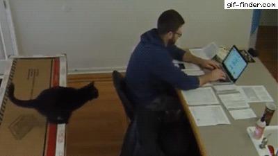 Кот в помощь! кот, рабочий стол, прыжок, покатушки, гифка