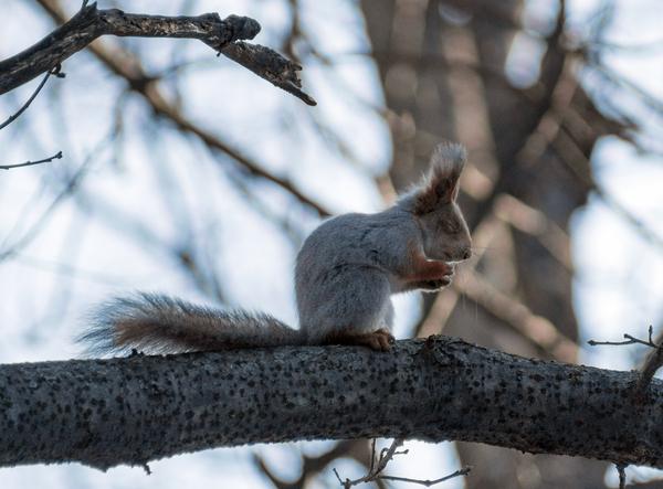 Милостивый беличий бог... белка, весна, лес, природа, фотография, милота