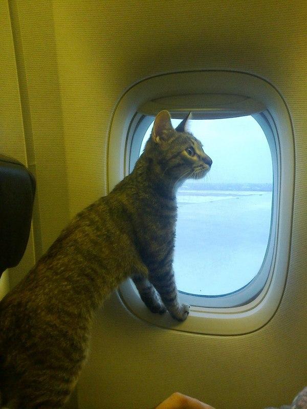 Кот в самолете прикол картинки, днем рождения роднулька