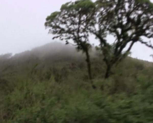 Галапагосы: Черепаший берег с Игуаньим царством. Часть 2 Эквадор, Галапагосы, черепаха, игуана, экзотика, путешествия, видео, длиннопост