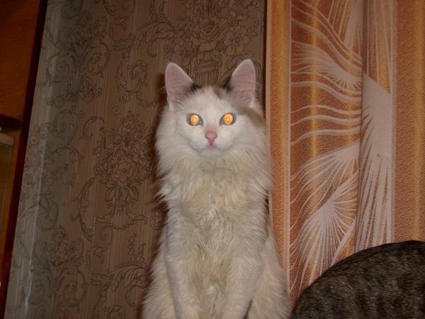 О моих котэ Кот, Девайс, Бездомные, Лечение, Длиннопост