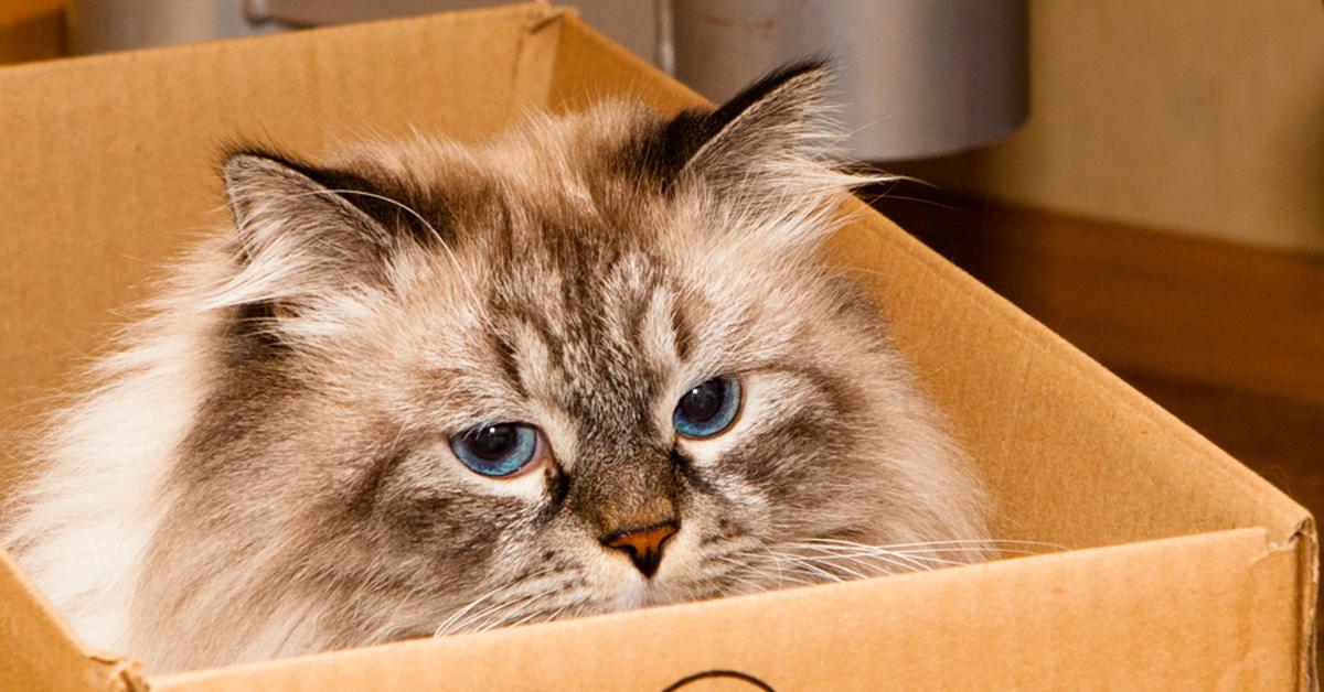 Для денег, картинки коты в коробке