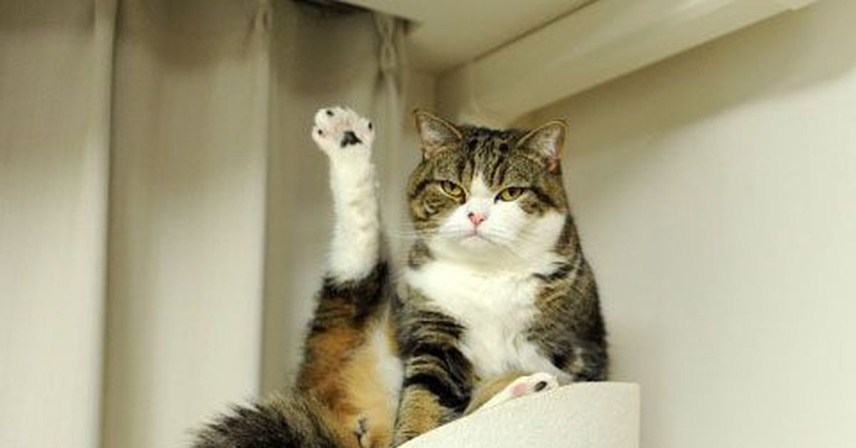 Хоба картинки котов
