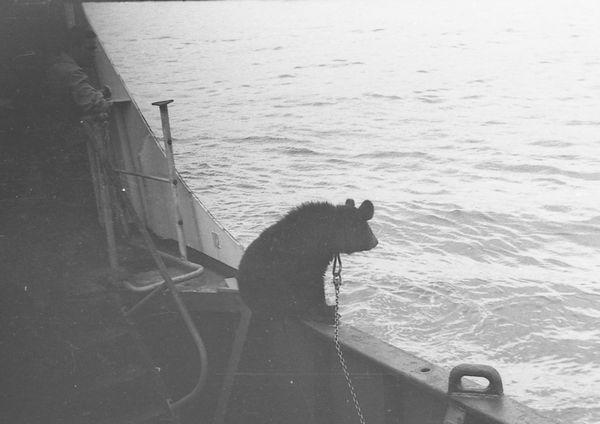 Медвежья вахта Сахалин, Медведь, Судно, Моряки