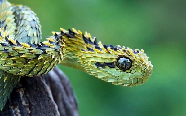 Эти странные....ЗМЕИ Змея, Необычное, Длиннопост