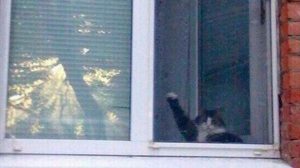 Всегда знал,что коты это зло Кот, Флешбек