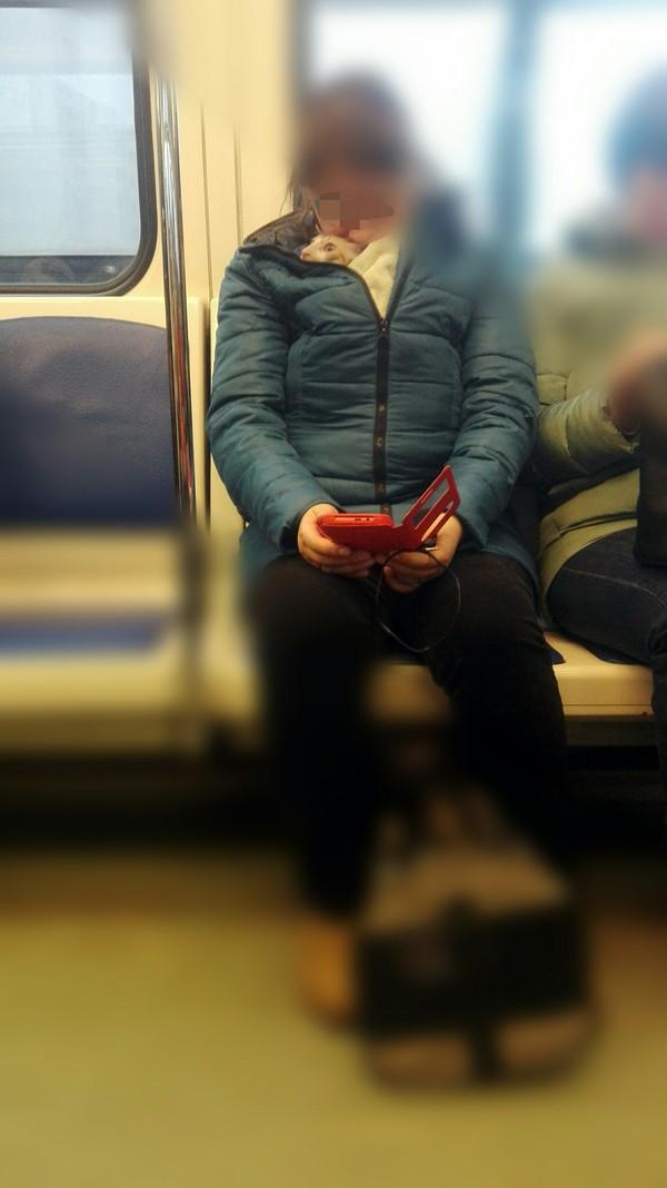 Котейка в метро оказался котейку жалко, метро, страх