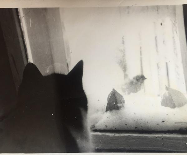 Старые фото с котанами Кот, Старое фото, Черно-Белое