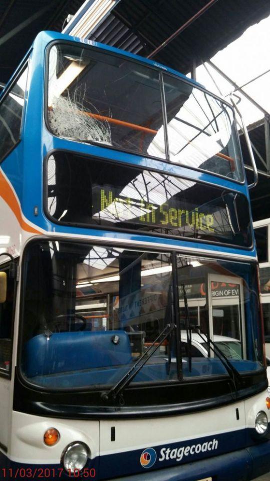 Фазан с каменной башкой покатался на автобусе, пробив ветровое стекло Фазан, Пробил головой, Автобус, Каменная башка, Твердолобый, Длиннопост
