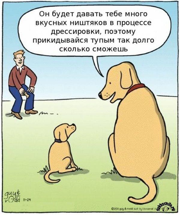 Взятка или награда? Почему собака не выполняет команду без еды? Собака, Дрессировка, Воспитание, Награда, Поощрение, Взятка, Длиннопост