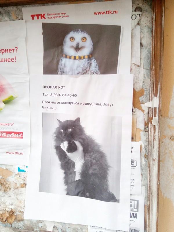 Кажется я знаю, куда он пропал Объявление, Фотография, Кот