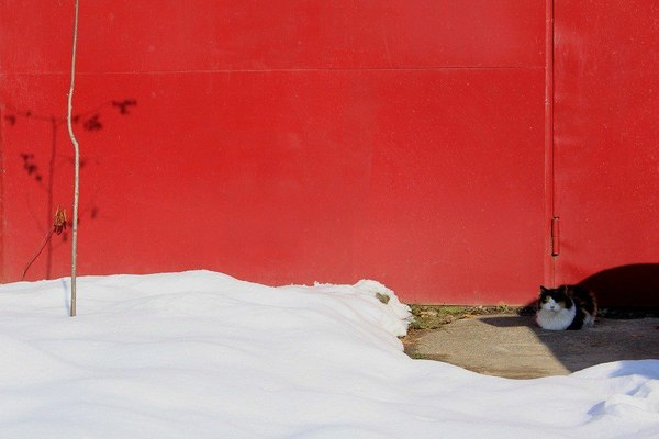 Художественное фото кот, весна, композиция, эстетика ебеней
