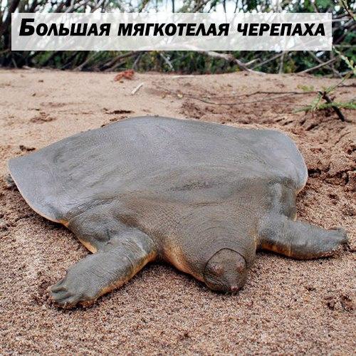 Эволюция, что ты делаешь? wtf_evolution, Эволюция, Большая мягкотелая черепаха