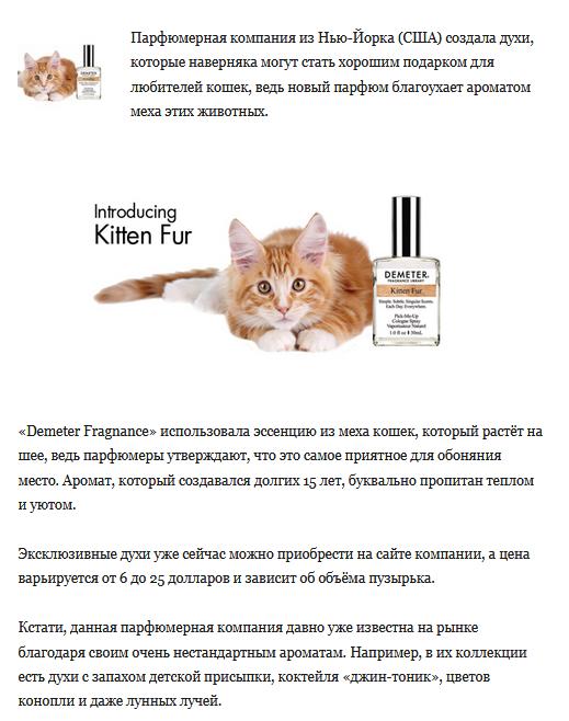 Создан парфюм с запахом кошачьего меха парфюм, кошачий мех, новости, духи, странности