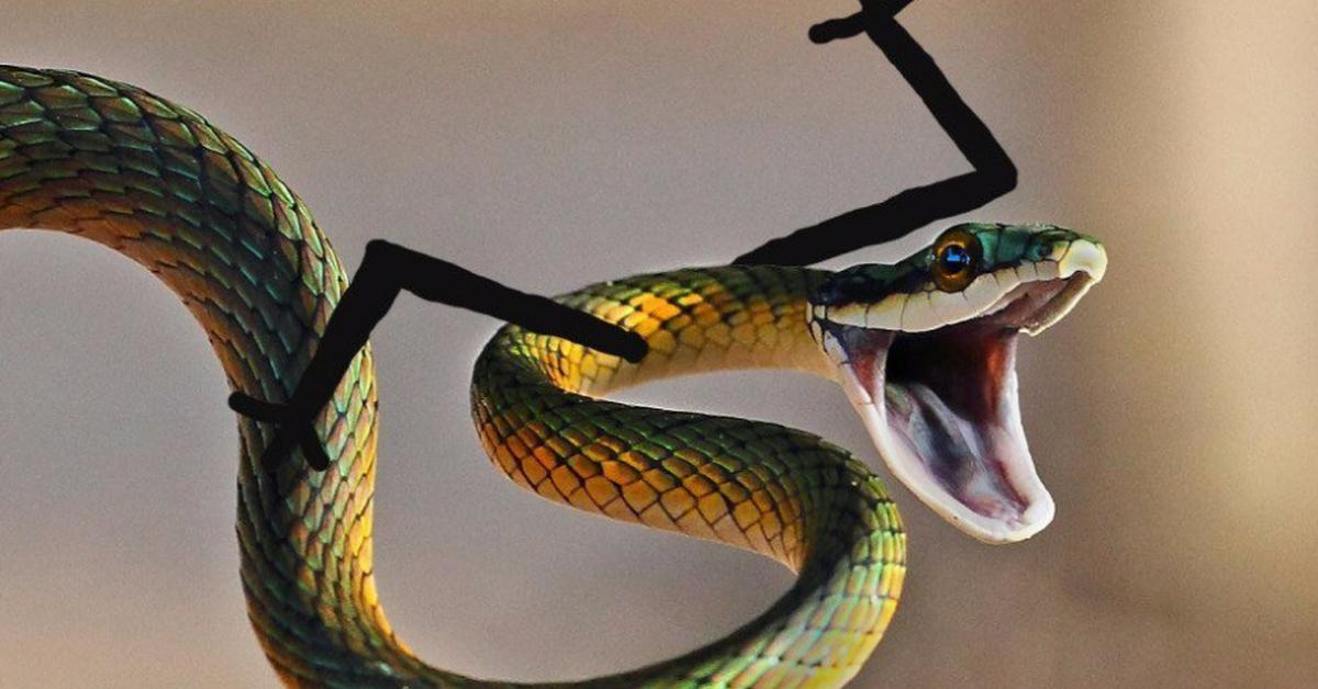 Смешные картинки про змею
