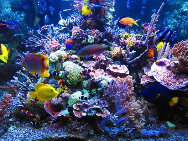 Морской аквариум у вас дома Аквариум, Море, Немо, Коралл, Длиннопост
