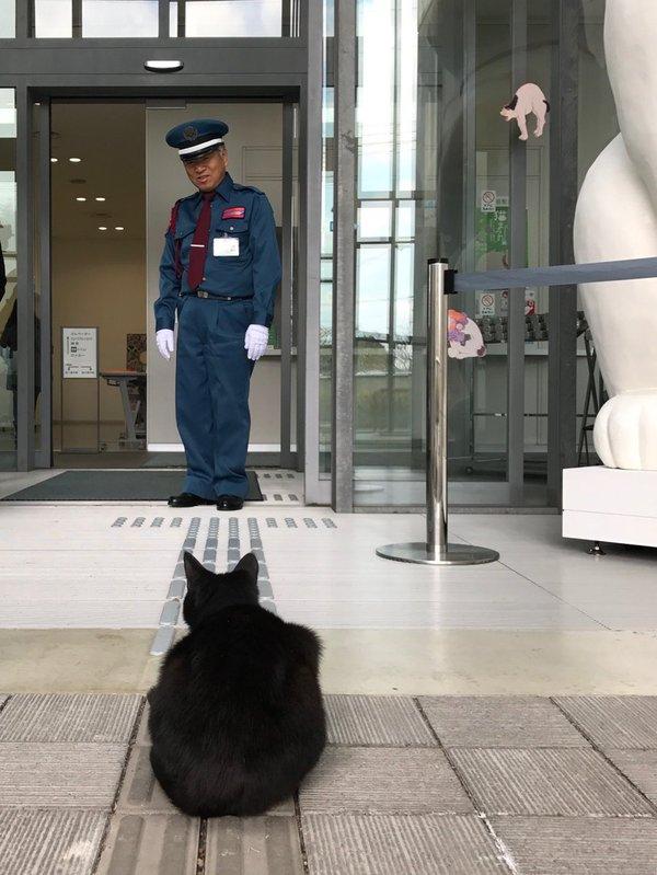 Как это мне нельзя на выставку котов?! Абсолютное неуважение, Фотография, Текст, Twitter, Японский интернет, Длиннопост, Кот