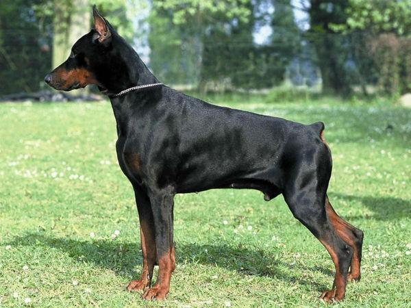 Хочу собаку как в фильме... Собака, Порода, Не узнать, Селлекция, Фотография, Длиннопост