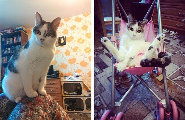 Все про котов пишут... Ну а наши хуже что-ли? Кот, Болезнь, История, Длиннопост