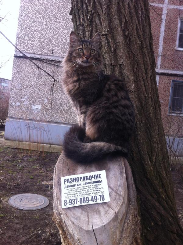 Кажется кот нашел работу Кот, Работа