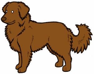 Генетика окрасов собак, часть №12, белая пятнистость Собака, Генетика, Гифка, Длиннопост