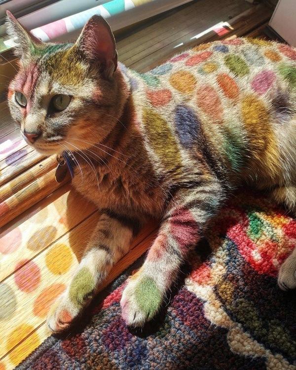 Радужный леопард.