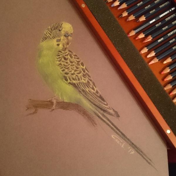 Птичка. Бумажка, карандашики.