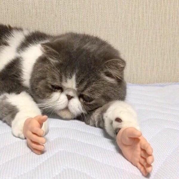 adopting a feral cat