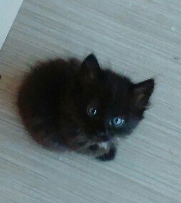 Отдам в добрые и надежные руки котят. МО (Балашиха) в добрые руки, кошки и котята, доброта, кот, отдам в хорошие руки, помощь