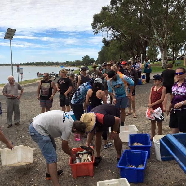 16,000 карпов за один день Австралия, Рыбалка, Карп, Длиннопост